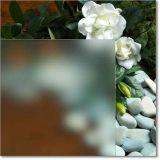 El vidrio grabado al agua fuerte ácido claro pulió con chorro de arena coloreado teñido