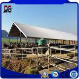 Edificios prefabricados de acero agrícola de la casa de aves de corral de ganado vacuno Farm House