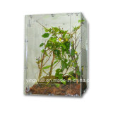 Alta calidad de acrílico caja de terrario de reptiles con Certificados SGS