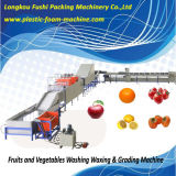 Lavagem de cebola de alta qualidade com cera e máquina de ordenação