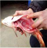 محترف صناعة سمكة آلة مع [ستينلسّ ستيل]