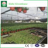 Serre chaude commerciale de film plastique de serre chaude de tunnel pour l'élevage de tomate