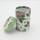 Оптовая торговля Fine Custom зеленый чай Подарочная упаковка