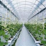 Película de plástico de gases com efeito de tomate para cultivo hidrop ico para venda