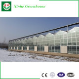 Aislamiento/invernadero endurecido/inteligente/de cristal de una sola capa para la flor/el vehículo/fruta/planta/granja/acuacultura/cría del ganado/restaurante ecológico