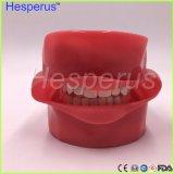 Зубоврачебная фантомная головка для зубоврачебной школы учя модельного Hesperus