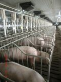 الخنازير آليّة يتوالد [إقويبمنت.]