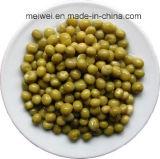 Best Seller enlatado Conserva de vegetais com ervilha verde