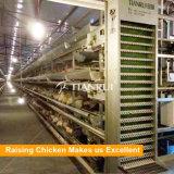 Matériel automatique de ferme avicole de modèle de batterie pour la couche