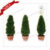 昇進の実質の感じのクリスマスの装飾H30-H80cmのための人工的な装飾刈り込み法のヤシの木