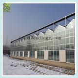 넓은 경간 수경법 농업 녹색 집