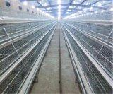 Matériel automatique de cage de poulet pour la poulette et le petit poulet (un type bâti)