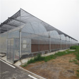 Serra di vetro del traforo della serra del sistema idroponico per il pomodoro