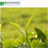 100 % Antioxydant naturel 90 % l'EGCG de thé vert