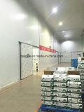 La construcción de la sala de almacenamiento en frío para congelar la carne