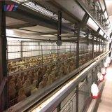 Galvanizado en caliente de la estructura de acero galpón avícola granja de pollos con bajo coste