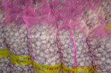 Чеснок нового урожая нормальный белый упакованный в коробке 10kg
