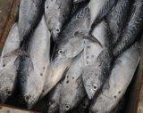Замороженные Bonito рыбных