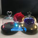 Tarro de cristal ligero del Cloche de Bell de la lámpara con diseño de la tapa de la belleza