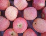 단것과 Crisp Red FUJI Apple