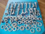 310/310S Stainless Steel Bolts와 Nuts