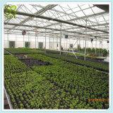 토마토를 위한 농업 PVC 녹색 집