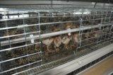 Het Systeem van de Kooi van de Kip van de jonge kip of het Systeem van de Apparatuur van het Landbouwbedrijf van het Gevogelte