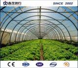 야채와 토마토를 위한 농업 플레스틱 필름 온실