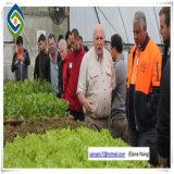 Парник сарая пленки цены фабрики Китая самый дешевый для огурца