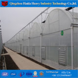 Специализированный низкой стоимостью парник фабрики пластичный с системой Hydroponics
