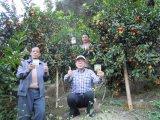 柑橘類の植わることのUnigrowの土改善