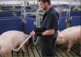 Beweglicher Tierarzt/Tierarzt-/Tierultraschall-Scanner/Gerät für die Kuh-Schwein-Hundeziege pferdeartig