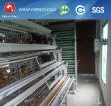 Tipo equipo de la casa de pollo H de las aves de corral de la jaula para la capa o la parrilla