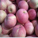 FUJI Apple, het Fruit van Apple, Vers Apple