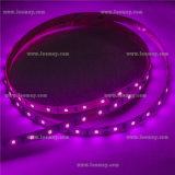 세륨 RoHS를 가진 DC12V SMD2835 테이프 밝은 자주색 LED 지구