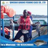 يعوم سمكة يزرع شبكة قفص في إفريقيا عمليّة بيع حارّ