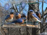 Claro Animal Casa Nido de Pájaro creativo comedero para pájaros