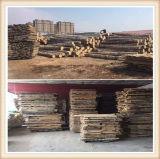 Legno di betulla naturale puro della lettiera di legno di betulla del nuovo prodotto (KJ0004)
