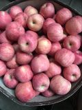 FUJI Apple mit guter Qualität für den Export