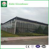 Konkurrenzfähiger Preis-Glasgewächshaus PC Blatt-Gewächshaus für Verkauf