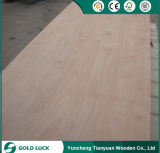 2-25mm Excels Grade Bintangor gold Okoume Faced Commercial Plywood 8X4
