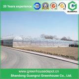 꽃 또는 과일 또는 야채 성장하고 있는 폴리에틸렌 필름 녹색 집