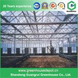 Estufa hidropónica profissional para a fábrica da planta e sistemas Growing de Soilles