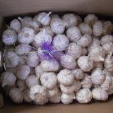 Nuovo aglio fresco con il sacchetto, imballaggio della scatola
