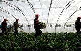 20/10 red anti del insecto del acoplamiento para la agricultura, calidad anti de la red del insecto del HDPE superior