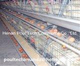 Cage Brooding de poulet de vente chaude avec le système automatique de matériel pour la ferme avicole (un type bâti)