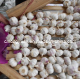 Nuovo aglio di bianco cinese del raccolto