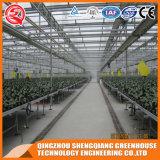 Kommerzielles Stahlkonstruktion PC Blatt-Gewächshaus für Gemüse