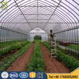 야채를 위한 온실 큰 10 미터 다중 경간 플레스틱 필름