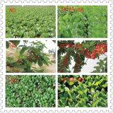 Fertilizzante chimico organico granulare di NPK